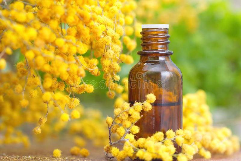 essential-aroma-oil-mimosa-fresh-flowers-68512351